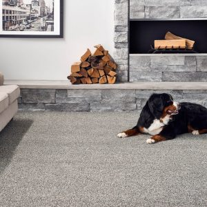 Pet friendly floor | Neils Floor Covering