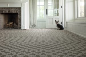 Dog near window on Carpet | Neils Floor Covering