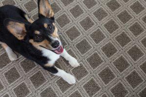 Pet friendly Carpet | Neils Floor Covering