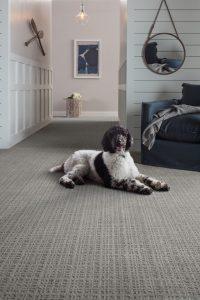 Dog on Carpet | Neils Floor Covering