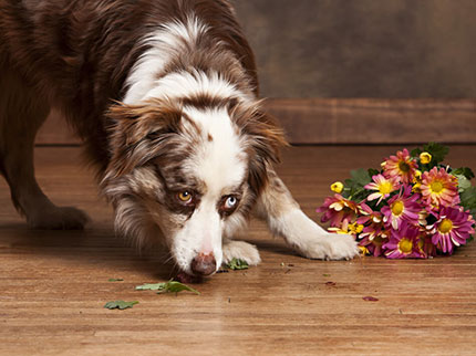 Pet friendly floor | Neils Floor Covering